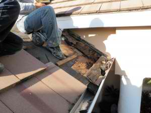 Can a Handy Man Fix Your Roof